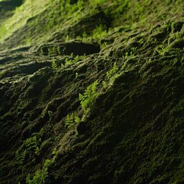 Gróður í Þórsmörk (Slyppugil)